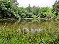 Schumpert-Pond-Seven-Islands-tn1.jpg