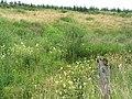 Scrubland at Rams Cleuch - geograph.org.uk - 535232.jpg