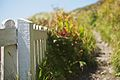 Seaside fence.jpg