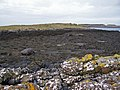 Seaweed covered shore - geograph.org.uk - 1228612.jpg