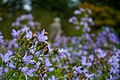 Secret Garden Flowers, Cliveden (7958667016) (2).jpg