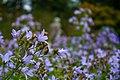 Secret Garden Flowers, Cliveden (7958667016) (2).jpg