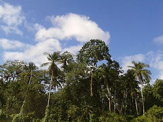 Delta Amacuro State of Venezuela