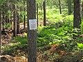 Seney National Wildlife Refuge (6033044922).jpg