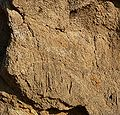 Sequoia National Park - Road cut off Mineral King Rd - closeup.JPG