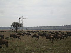 Serengeti National Park-119475.jpg