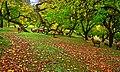 Serenity, Royal Garden at Altit Fort.jpg