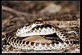Serpentes (7378134652).jpg