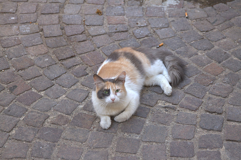 File:Servian - Chat.jpg