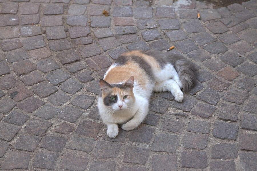 Un chat à Servian.