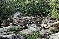 Seychelles Aride Island Sooty Terns - panoramio (1).jpg