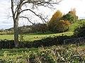 Sheep grazing near the River Wye - geograph.org.uk - 601151.jpg