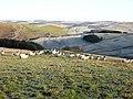 Sheep on Mid Rig - geograph.org.uk - 639944.jpg