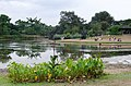 Singapore Botanical Gardens, Lake Area - panoramio.jpg