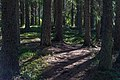 Skogssti på Øverby i Gjøvik.jpg