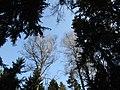 Sky above the forest. February 2014. - Небо над лесом. Февраль 2014. - panoramio.jpg