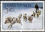 Sled-Dogs-Canis-lupus-familiaris.jpg
