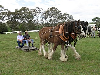 Horse pulling - Horse pulling in Australia