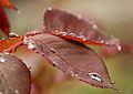 Sliding dew (6930169198).jpg