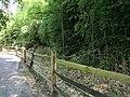 Sligo Creek Trail Kemp Mill 26.jpg