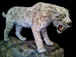 Smilodon Fatalis by Salvatore Rabito.jpg