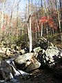 Smith Creek-Chattahoochee River.jpg
