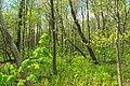 Soft Green (3) (14210089804).jpg