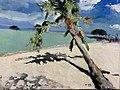 Spiaggia con Palma.jpg