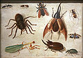 Spiders and insects mg 0150.jpg