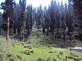 Srinagar - Pahalgam views 64.JPG