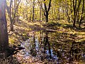 Stagno nel Bosco di Foglino in autunno.jpg
