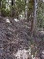 Starr-040912-0046-Eucalyptus sp-trail building-Makawao Forest Reserve-Maui (24088665404).jpg