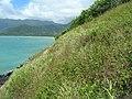 Starr-050419-0401-Bidens alba var radiata-habit-Mokolii-Oahu (24652546331).jpg