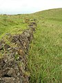 Starr-051122-5364-Cenchrus clandestinus-habitat with rock wall-Haleakala Ranch-Maui (24731698802).jpg