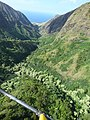 Starr-151005-0187-Aleurites moluccana-aerial view makai-West Maui-Maui (26010467850).jpg