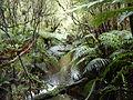 Stewart Island Fern Gully.jpg