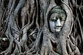 Stone Buddha covered in tree roots.jpg