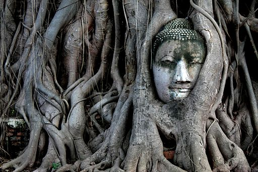 Stone Buddha covered in tree roots