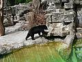 Suisse zoo (1).jpg