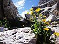 Sulla roccia non cresce l'erba..ma i fiori si - panoramio.jpg