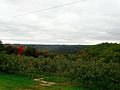 Sunrise Orchards Apple Trees - panoramio.jpg
