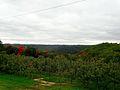 Sunrise Orchards Apple Trees - panoramio.jpg