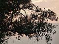 Sunset at Purandarpur,Birbhum.jpg