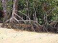 Suriname, Overbridge Resort - panoramio (2).jpg