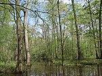 A hardwood swamp.