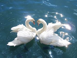 Nondualism - Swans are important figures in Advaita
