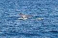 Sydney (AU), Pacific Ocean, Humpback Whales -- 2019 -- 3292.jpg