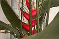 TU Delft Botanical Gardens 60.jpg
