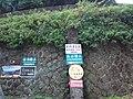 TW 台灣 Taiwan 新北市 New Taipei 瑞芳區 Ruifang District 洞頂路 Road 黃金瀑布 Golden Waterfall August 2019 SSG 02.jpg
