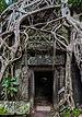Ta Phrom, Angkor, Camboya, 2013-08-16, DD 42.JPG